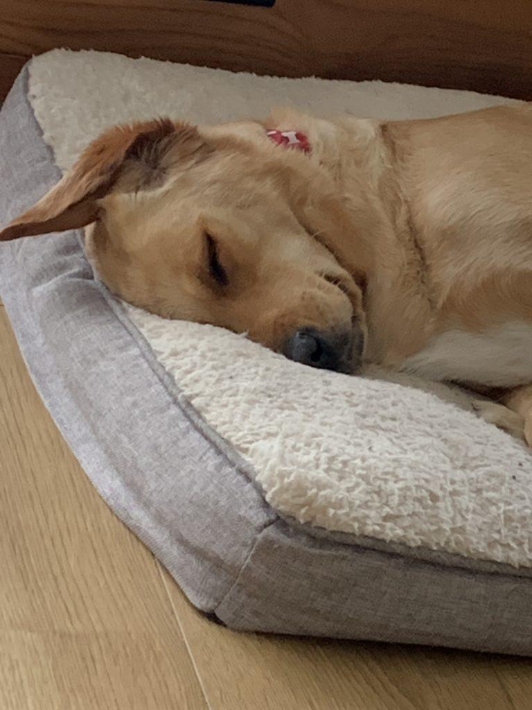 Meet Ida head of mindfulness and wellbeing asleep on the job
