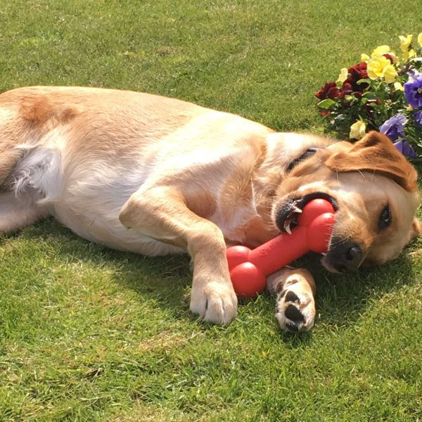 Meet Ida head of mindfulness and wellbeing playing with her toy